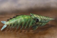 Hurdia was a primitive cousin of insects and other arthropods. Copyright Quade Paul