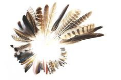 Label each feather with the species name