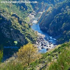 Right in the heart of Portugal. Enjoy the wild of our country.  www.cavadoflyfishing.com #portugal #flyfishing #fishing #trout #wildtrout #browntrout