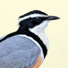 """Daily Paintworks - """"Egyptian Plover"""" - Original Fine Art for Sale - © Alex Warnick"""