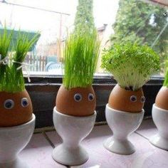Funny Egg Planters