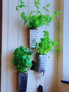 Cheese grater herb planters