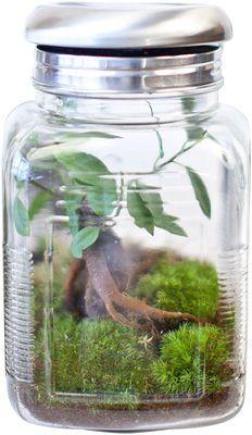 Mini-serre autonome Treeki & son Ginseng / Pot lumineux Green Factory, Terrarium, Ficus Ginseng, Mini Serre, Green Art, Mason Jars, Plants, Design, Grid