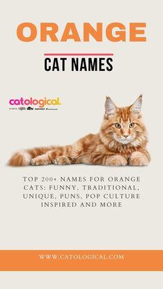 Grey Cat Names, Cute Cat Names, Grey Cats, White Cats, Unique Cat Names, Cat Care Tips, Orange Cats, Cute Cat Gif, Inspirational Celebrities