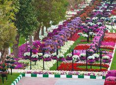 Jardim mais florido do mundo fica em Dubai