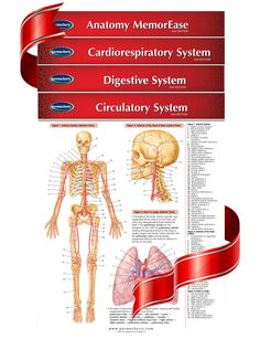 Medical Bundle - Medical Students and practising Physicians will benefit most from this 4 chart bundle. You get 4 quick reference guides that cover Anatomy MemorEase, Cardiorespiratory System, the Digestive System and Circulatory System. Permachart are known as the best learning and study aids in the medical community and in true Permacharts fashion these 4 expertly written charts provide you with just the facts, tips and information you need to learn and excel in your profession.