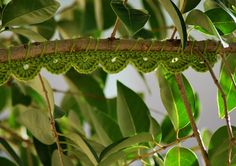 Selvage Blog: Green Caterpillar and More from Tanya