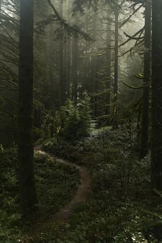 Misty forest at Silverton falls area, Oregon by Anna Calvert   Flickr - Photo Sharing!