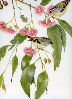 Pardalotes in Euc 1480 461 Australian Painting, Australian Art, Watercolor Leaves, Floral Watercolor, Watercolour, Botanical Flowers, Botanical Prints, Bird Artwork, Flower Artwork