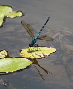Do you believe the spirit of loved ones come to visit in the form of a dragonfly?