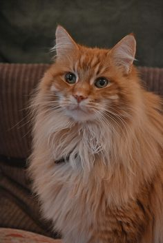 """""""The cat was created when the lion sneezed."""" --Arabian Proverb"""