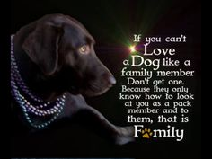 Why do people consider there pets as there family?