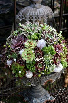 Beautiful succulent arrangement in pedestal container.