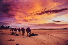 Trade in your commuter pass for a camel in Broome. Photo credit: Josh Jenssen / Flickr