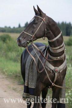 Эти удивительные лошади - Страница 19 - Форум SKIFDOGS