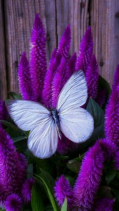 # Purple Photography
