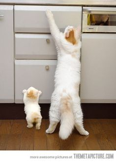I wanna be like my mommy…