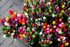 Spring is here.....Tulips popping everywhere!