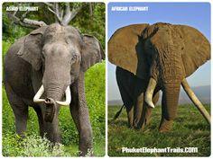 asian elephants - Google 検索