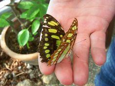 Garten Der Schmetterlinge in Koblenz at butterfly on Jeremy's hand