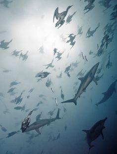 sharks n birds n fish