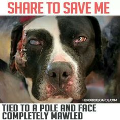 Poor baby!! WE WILL FIGHT FOR YOU!!! IF U DO NOT REPIN OR LIKE THIS I SWEAR YOU…