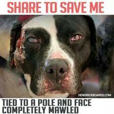 Stop Animal Abuse!!!