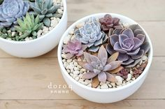 This is the type of container I'm going to have my arrangements in ... The brightness, whiteness, like the light wood too!