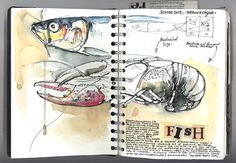 19 Ideas Gsce Art Sketchbook Fish For 2019 A Level Art Sketchbook, Sketchbook Layout, Artist Sketchbook, Sketchbook Pages, Sketchbook Inspiration, Sketchbook Ideas, Journal Inspiration, Journal Ideas, Animal Sketches