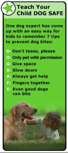 Preventing Dog Bites (for Parents) Dog Care Tips, Pet Care, Dog Safety, Safety Rules, Kids Safety, Dog Health Care, Dog Items, Large Dog Breeds, Dogs And Kids