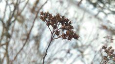 Beautiful flower  3