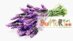 melisă, lămâiţă, floarea stupilor, busuiocul stupului, iarba roilor, – Căutare Google Cabbage, Vegetables, Google, Cabbages, Vegetable Recipes, Brussels Sprouts, Veggies, Sprouts