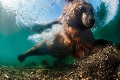 UK-Underwater-Photographer-of-the-Year-2016-Winners-5