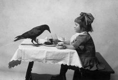 afternoon tea with a raven