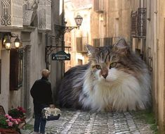 Giganto-kitty!  :-D  I want one!  Not sure where I'd keep him/her though lol. Jordan's getting a kick out of this one.