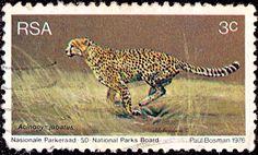 RSA. Wildlife Protection. Heetah. Scott 465 A184, Issued 1976 June 5, Litho., Perf. 12x12 1/2, 3. /ldb.