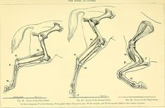 File:The Horse - its treatment in health and disease, with a complete guide to breeding, training and management (1905) (14763785632).jpg