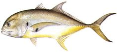 fish to eat - Google Search