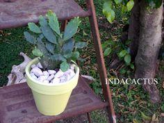 Suculenta en maceta de terracota pintada en color pistacho. VENDIDA
