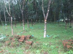 Residential Land for sale in Kizhakkambalam-Kakkanad. Land for sale in Kizhakkambalam-Kakkanad. Buy, sell, rent properties in Kakkanad through http://www.sichermove.com