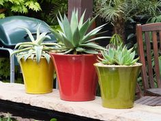 Stylish brightly colored garden pottery.
