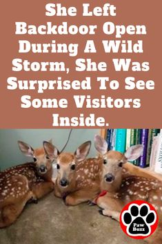 She left her patio door open during a storm and something amazing happened. Animals And Pets, Baby Animals, Cute Animals, Animal Babies, Funny Animals, Woodland Creatures, Cute Creatures, Horse Dance, What Is Cute