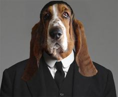 """Oh Mister Bates, we hardly recognized you! Fun photo essay on Dogster.com on """"Dogton Abbey"""" parody!"""