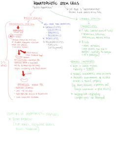 Hematopoietic Stem Cells. Erythrocyte. Lymphocyte. Granulocytes. Monocytes. Myeloid Stem Cells. Lymphoid Stem Cells.