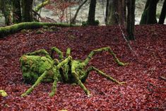 French artist Sylvain Meyer creates beautiful art installations in nature.
