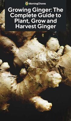 Growing Ginger: The Complete Guide to Plant, Grow and Harvest Ginger