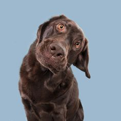 Adorable dogs pull off variety of cute and quirky faces for portraits Animals And Pets, Funny Animals, Cute Animals, Cute Animal Photos, Animal Pictures, Romain Gary, Pet Photographer, Dog Photos, Mans Best Friend