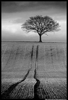 Tree and Tracks by Dan Harrod, via Flickr