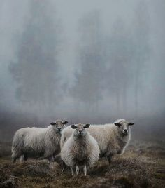 how do html color codes work Farm Animals, Animals And Pets, Cute Animals, Beautiful Creatures, Animals Beautiful, Sheep Paintings, Lamas, Sheep And Lamb, Tier Fotos