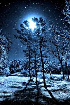 the woods on a moonlit night. . . .